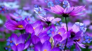 purple flowers hd wallpapers for desktop best collection
