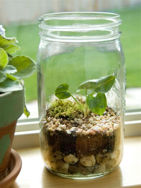 create  terrarium hgtv