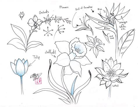 doodle flowers how to pictures of flowers to draw beautiful flowers