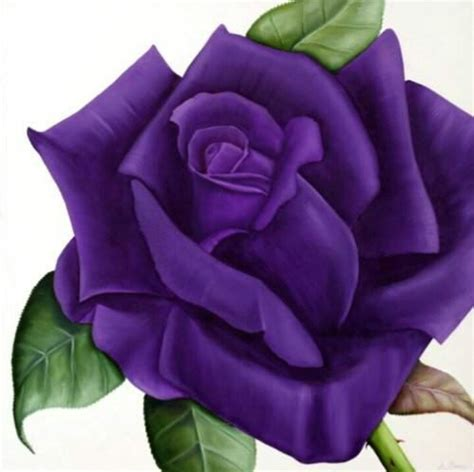 purple roses tattoo lovely for my cover up ink