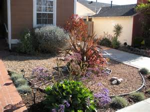 drought tolerant landscapes make simple fresh and modern drought tolerant landscaping