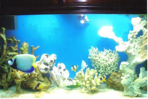 linda perry cnm aquarium service nyc home facebook