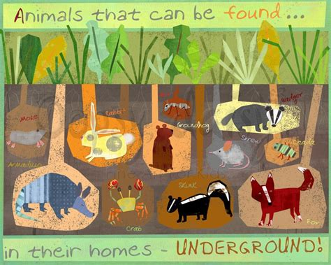 a summer s reading themes burrowing animals cool board for summer reading theme quot dig