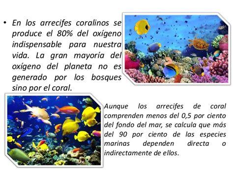 libro el arrecife de las datos curiosos sobre los arrecifes de coral