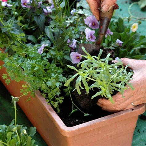 Planter Des Pensées En Jardiniere by Faire Une Jardini 232 Re Jardinage