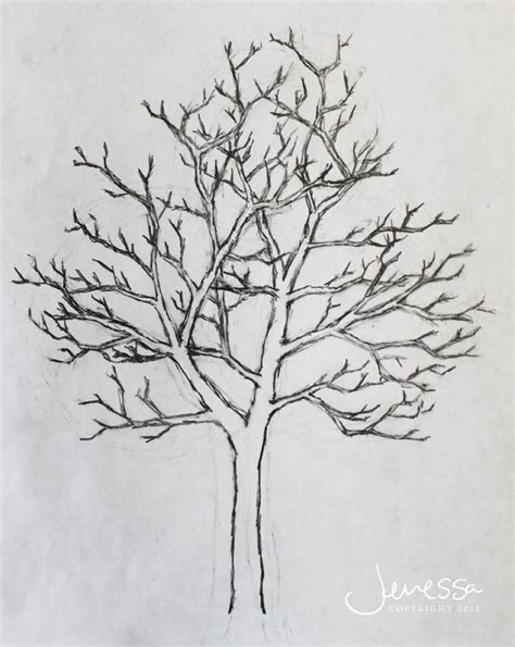 simple drawing tree pictures of trees drawing jmariemi how to draw a tree