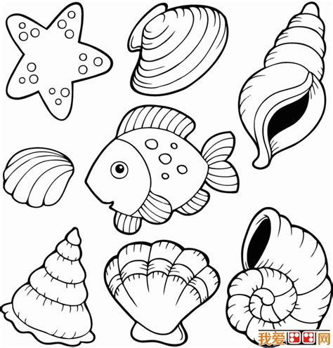 shell coloring pages shells coloring pages coloring home