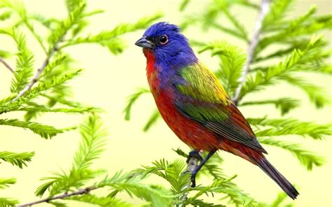 colorful bird wallpaper 3609