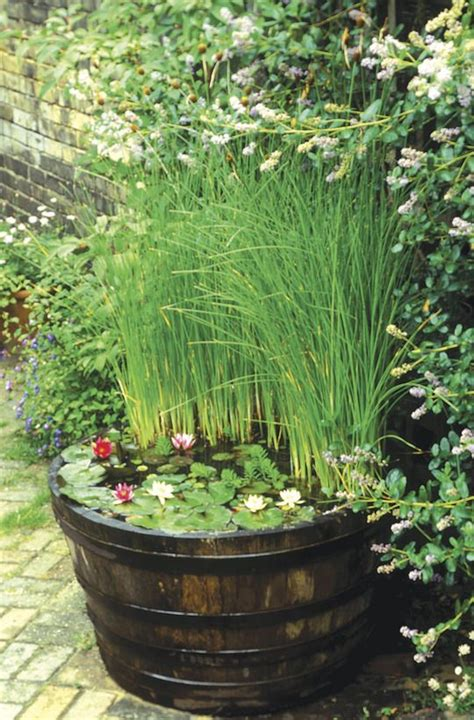 container water gardens container water garden greenhouse ideas