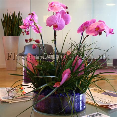 Orchid Delivery | purple passion tender loving care to your purple orchid