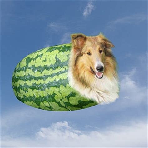 dogs and watermelon 8tracks radio watermelon 10 songs free and playlist