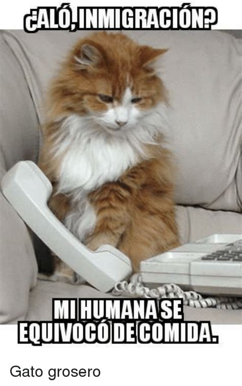 Gato Meme - 25 best memes about memes memes meme generator
