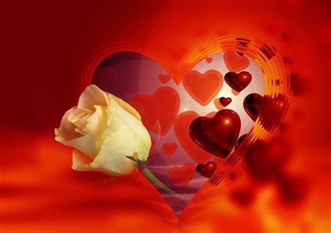 imagenes de corazones i flores rose mature love quotes