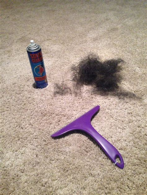 getting dog hair out of couch 1000 ideas about static hair on pinterest hair