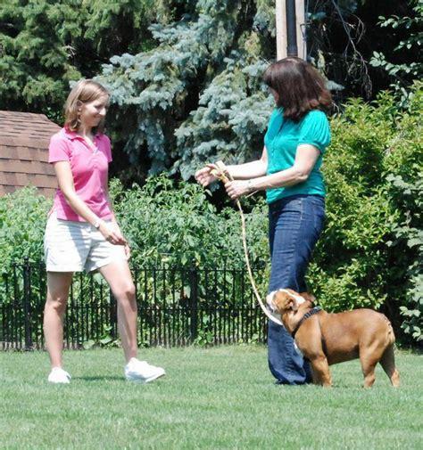 puppy classes chicago chicago area lemont il 60439 630 343 9430