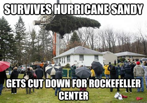 survives hurricane sandy gets cut down for rockefeller