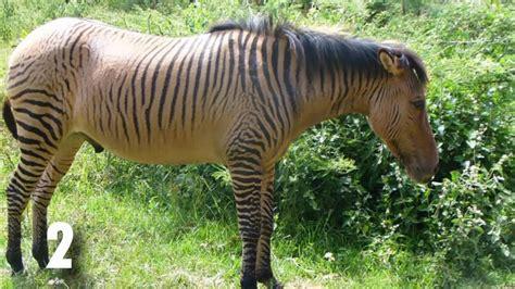 imagenes de animales raros del mundo los 10 animales mas raros del mundo youtube