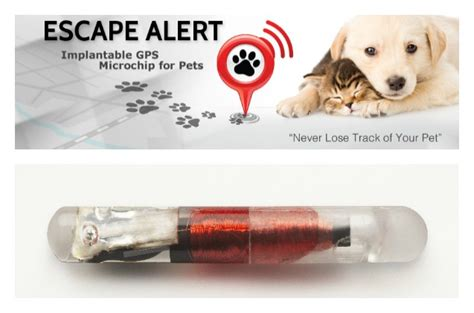 what is a microchip for dogs microchip with gps economical home lighting