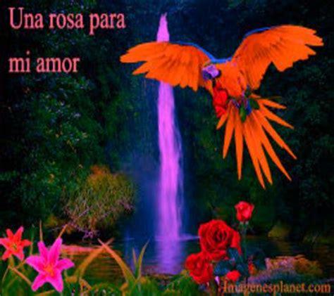 imagenes de paisajes y frases de amor imagenes de amor con frases bonitas mensajes de amor