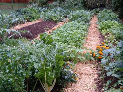 Fall Vegetable Garden Ideas Makeovers For Awesome Fall Vegetable Gardens