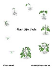 The Life Of A Flower - plant life cycle