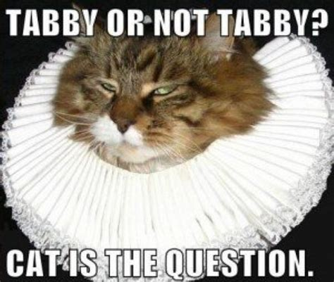 Tabby Meme - shakespeare memes 20 photos thechive