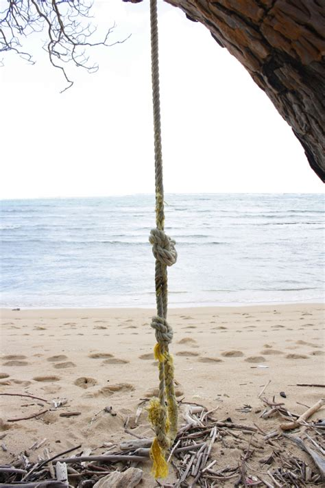 swing in the beach rope swing in laie hawaii on clissolds beach laie