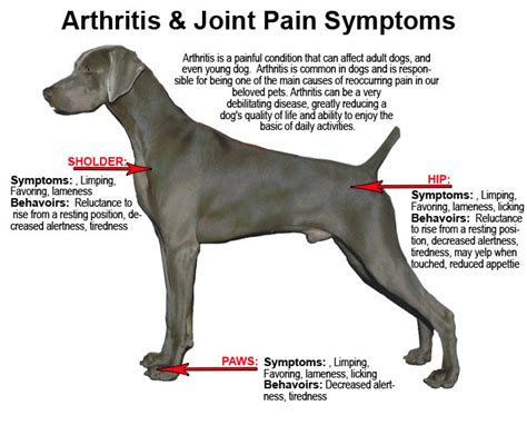 arthritis medication for dogs arthritisa