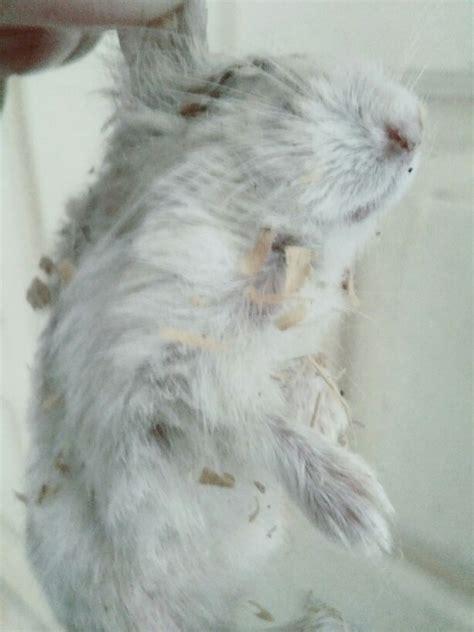Makanan Hamster Kuaci sedih hamsterku banyak yang mati gara gara makan kuaci