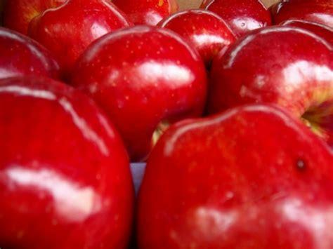 imagenes de otoño rojo fotos de color rojo