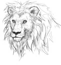 Easy lion roaring drawing how to draw lion sketch how to