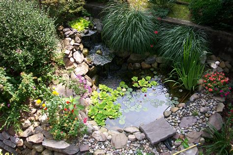 small backyard pond surrounded by with