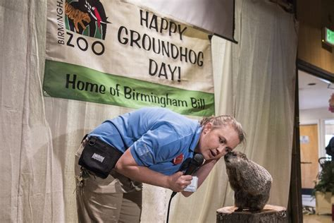 groundhog day birmingham zoo birmingham bill disagrees with punxsutawney phil