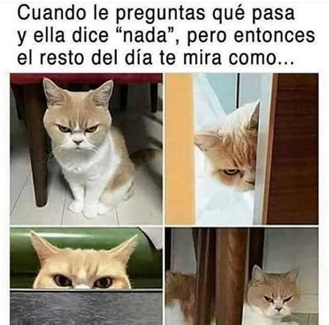 Cat Sitting At Table Meme - los mejores memes de esta semana compartidos por whatsapp