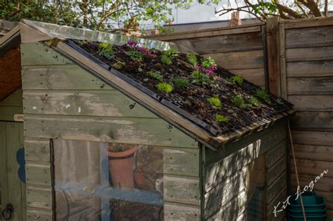 living roofs living roofs and