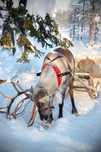 where to buy a sled and reindeer for the roof of your house 438 best images about santa s reindeer sleigh on santa clause dancers and