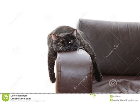 laid on the couch hangover cat stock photo image 43304185