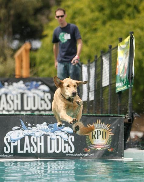splash dogs america s family pet expo is coming to the oc fair and event center april 19 21