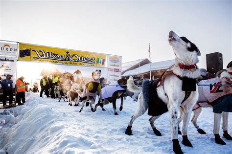 alaskan sled race survival is the ultimate goal in world s toughest sled