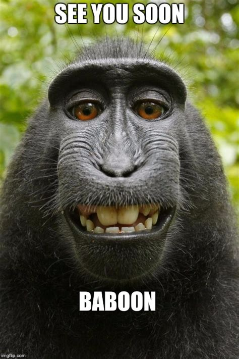 Baboon Meme - image tagged in baboon selfie imgflip