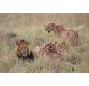 Related Posts To Queen Elizabeth National Park Uganda Map