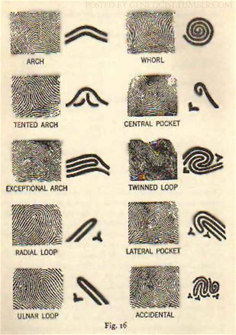 pattern types of fingerprints mapsinchoate fingerprints as maps fingerprint patterns