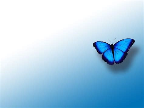 blue wallpaper with butterflies blue butterfly backgrounds wallpaper cave