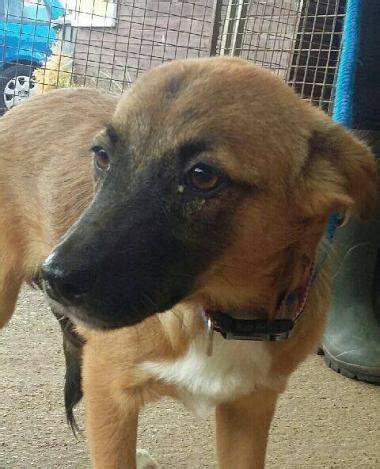 rona dog house rona 1 2 year old female cross breed dog for adoption