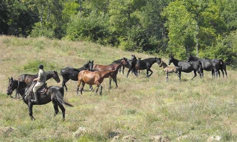 vendita cobasso allevamenti cavalli allevamento cavalli in umbria le