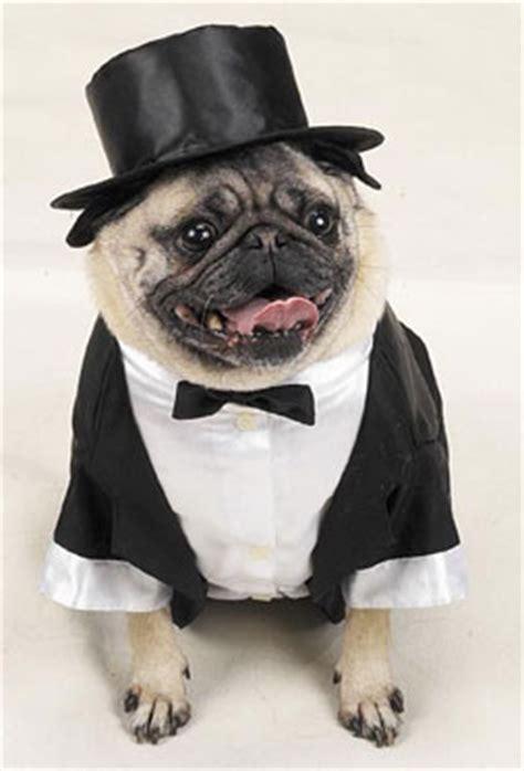 pugs clothing dress  dog clothes   pets