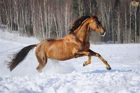 5 6 Horse Rugs Tips On Taking Care Of Horses In Colder Weather Pets4homes