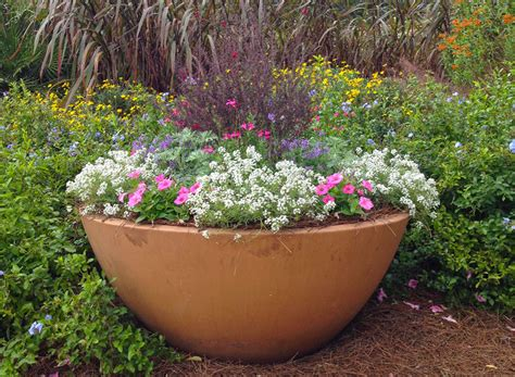 Flowers For Planters Sun by How To Grow A Spectacular Container Garden