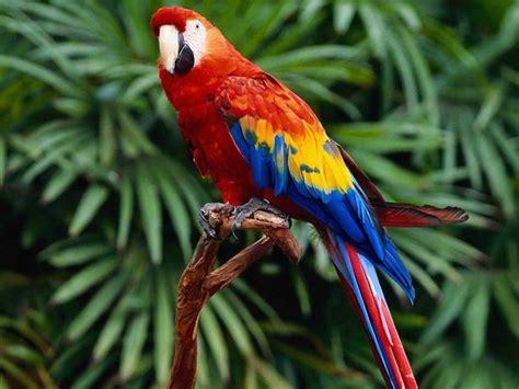 imagenes animales aves imagenes de aves pajaros 11 08 12