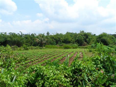 Bed Murah Di Bogor rumah dijual bogor tanah murah di bogor tanah tenjo 1 jpg